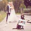 Chụp hình cưới đẹp cùng thú cưng của bạn